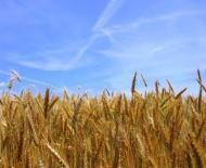Продам фермерське господарство